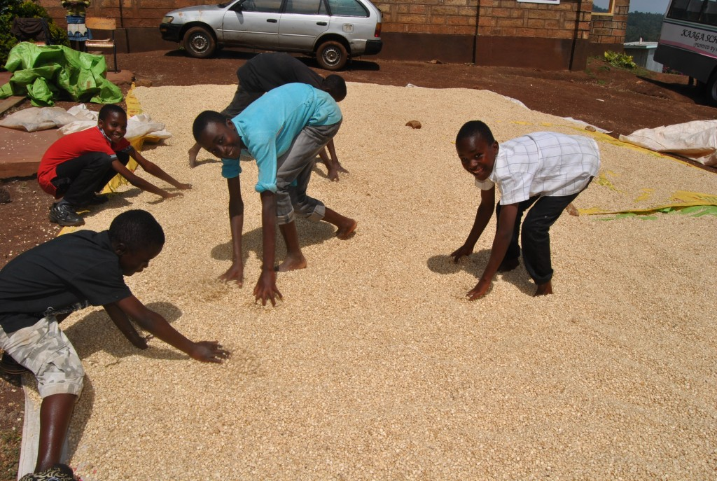 Our boys spread out the maize to dry in the sun.